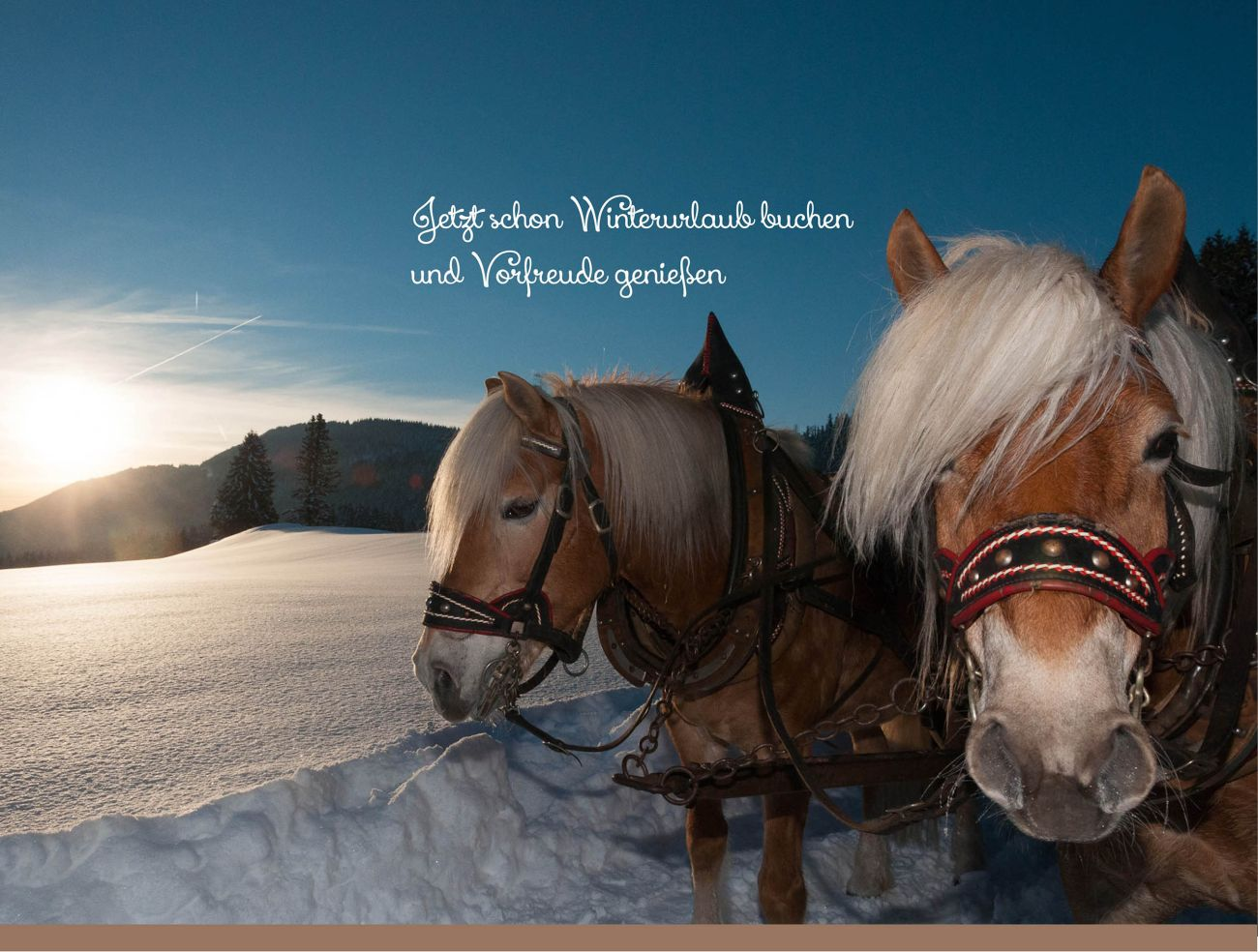 Haflinger Winter